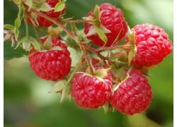 Raspberry Heritage Pack