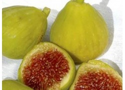 White Adriatic Fig
