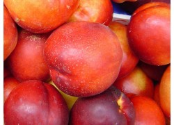 Red Gold Nectarine
