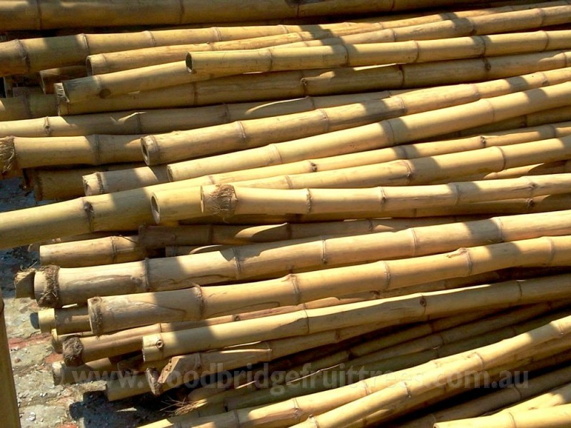 Bamboo garden stakes Woodbridge Fruit Trees