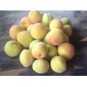 """Prunus Mume """"Bungo"""""""