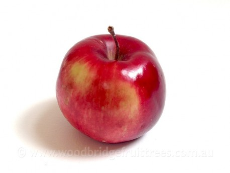 Pomme De Neige Dwarfing