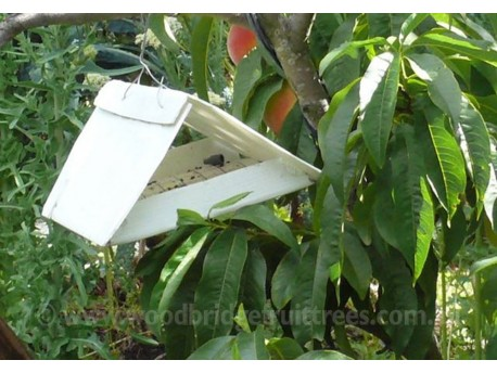 Codling Moth Pheromone Trap with refils