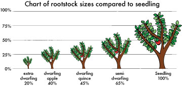 Rootstock size chart